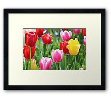 Pick A Color Framed Print