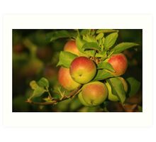 Apple Bouquet Art Print