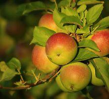 Apple Bouquet by Kelly Chiara