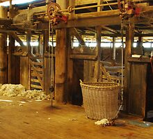 BERIDA WOOLSHED PLANT by Helen Akerstrom Photography