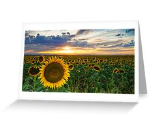 Sunflowers Of Golden Hour Greeting Card