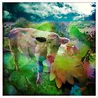 Pastoral hues by Cara Gallardo Weil