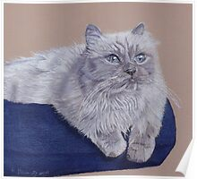 Bayou - A Portrait of a Himalayan Cat Poster