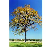Autumn at Valley Forge, Pennsylvania Photographic Print