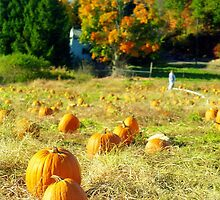 Pumpkin Patch, Connecticut by Alberto  DeJesus