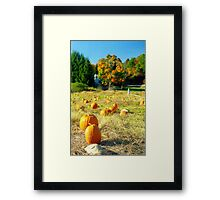 Pumpkin Patch, Connecticut Framed Print