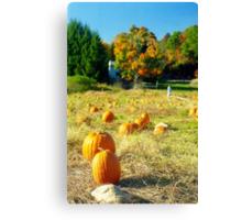Pumpkin Patch, Connecticut Canvas Print