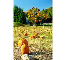 Pumpkin Patch, Connecticut Photographic Print