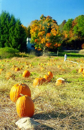 Pumpkin Patch, Connecticut by Alberto  DeJesus