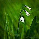 Green by AbbottPhotoArts