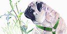Pug & Nature - Colored Pencil by Patricia Barmatz