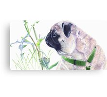 Pug & Nature - Colored Pencil Canvas Print