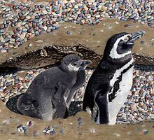 Looking Out For You - Mother & Baby Penguins by Patricia Barmatz