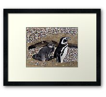 Looking Out For You - Mother & Baby Penguins Framed Print