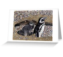 Looking Out For You - Mother & Baby Penguins Greeting Card