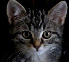 Little Kitty by Nicki Baker