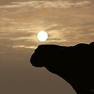 Camel by SophiaDeLuna