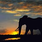 Elephant at Sunset by SophiaDeLuna