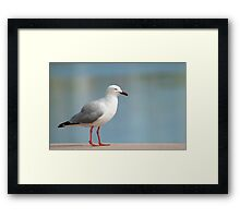 So where are the chippies???   Framed Print