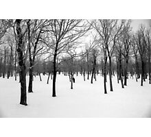 Winter Woods, Canada Photographic Print