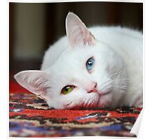 Charlie The White Pussy Cat Poster