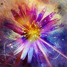Starlet by Vanessa Barklay