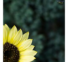 Sunflower Corner Photographic Print