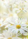 dancing daisies by Teresa Pople