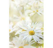 dancing daisies Photographic Print
