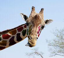 Rainbow Giraffe by saifty
