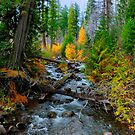 Jack Creek ~ Central Oregon ~ by Charles &amp; Patricia   Harkins ~ Picture Oregon