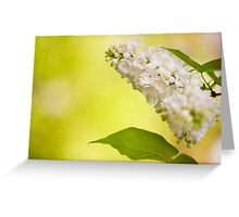 Lilac white flowers bloom Greeting Card