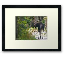 Maine Moose bull Framed Print