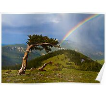 Bristlecone Pine Rainbow On Mount Evans Poster