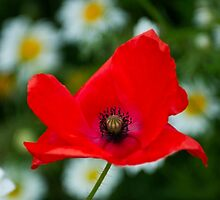 Not Just For Remembrance by John Hare