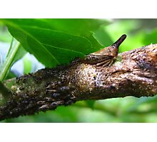 Mama Treehopper and the Kids...  Photographic Print