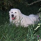 Beautiful Maremma Girl by ariete