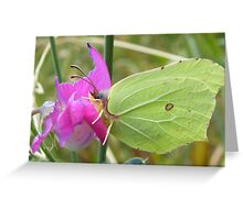 Brimstone butterfly on flower Greeting Card