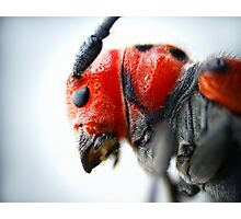 Red Beetle Profile Photographic Print