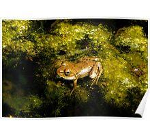 At Last.....I am a Frog Poster