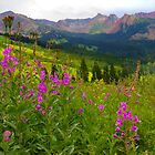 Fireweed Abundance by CrowningGlory