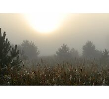 Pines, grassland and sunrise in fog Photographic Print
