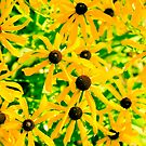 Wild Yellow Daisies by Carolyn Chentnik