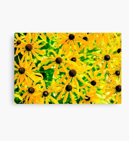 Wild Yellow Daisies Canvas Print
