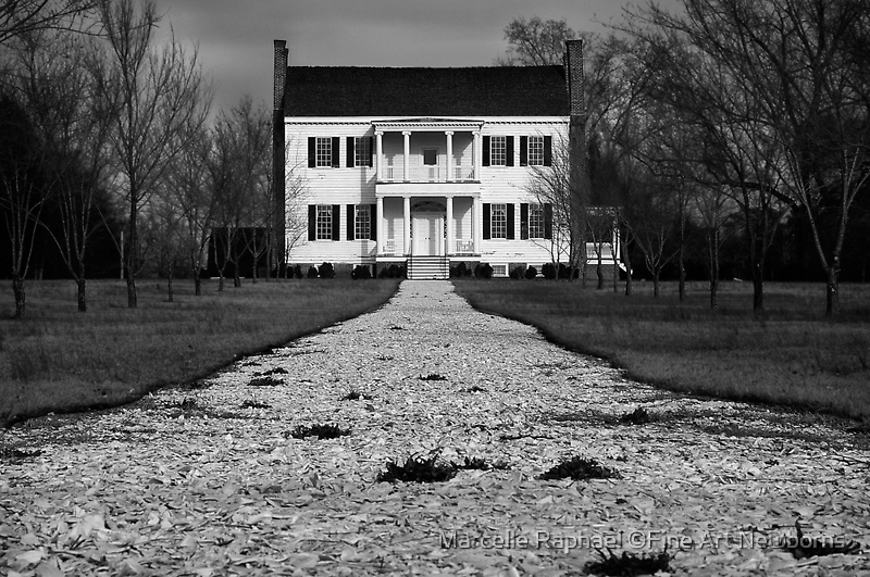 Restoration in Black & White by Marcelle Raphael