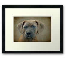 Go Ahead.....Make My Day Framed Print
