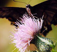 Hungry Butterfly by Rick McFadden