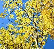 Golden Aspen Leaves in Colorado Fall Mountains by Amy McDaniel