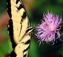 Side Butterfly by Rick McFadden