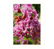 Berry Flower Art Print